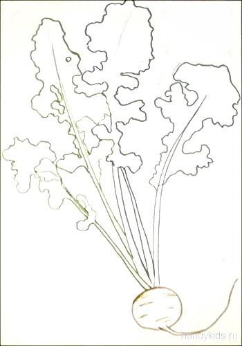 Рисунок Репа -13