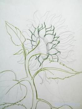 Как рисовать подсолнух поэтапно