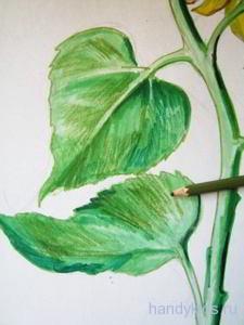 Рисуем подсолнух акварельными карандашами