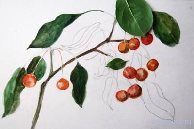 Как рисовать ветку яблони
