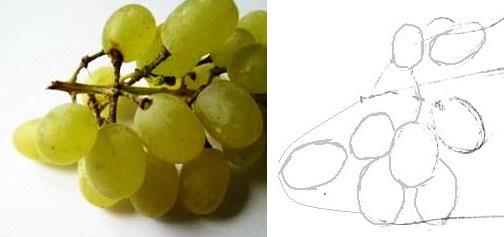 Рисуем ягоды винограда