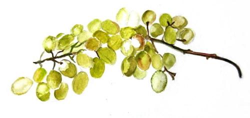 Рисуем виноград -8
