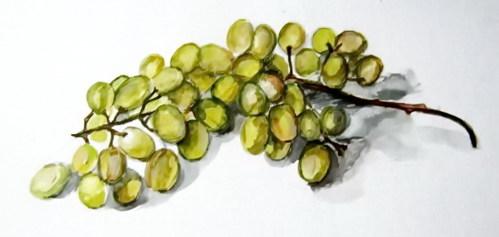 Рисунок  виноград