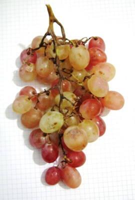 Фотография -гроздь винограда