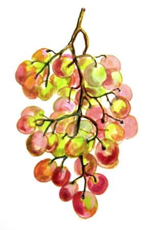 рисунок с натуры -виноград