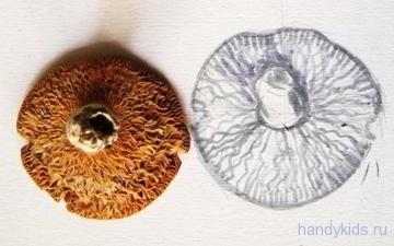 Рисунок -гриб сыроежка