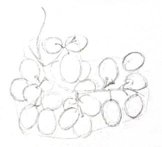 Рисунок карандашом -виноград