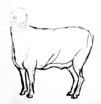 Поэтапный рисунок овцы