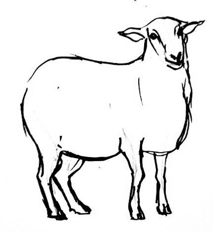 Рисунок - раскраска Овечка