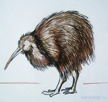 Птица киви рисунок
