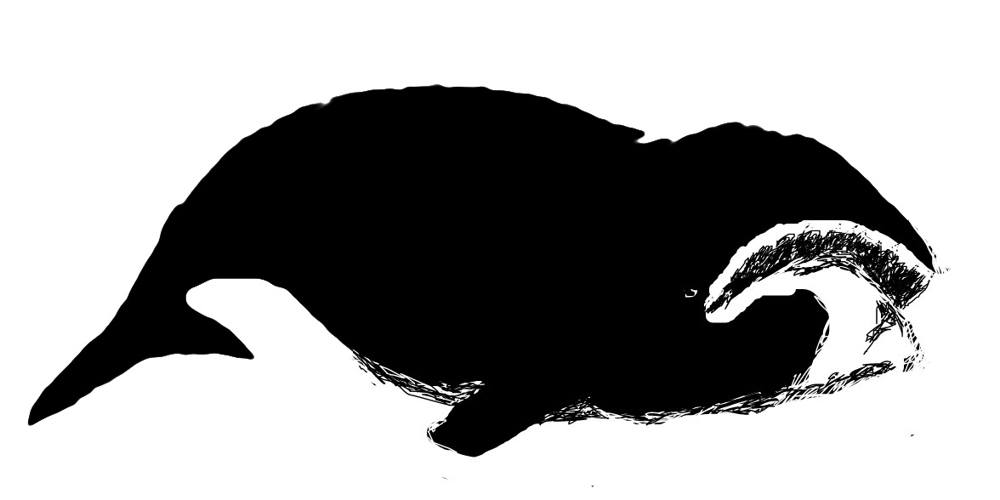 Рисунок Кит