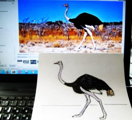 Как нарисовать страуса -13