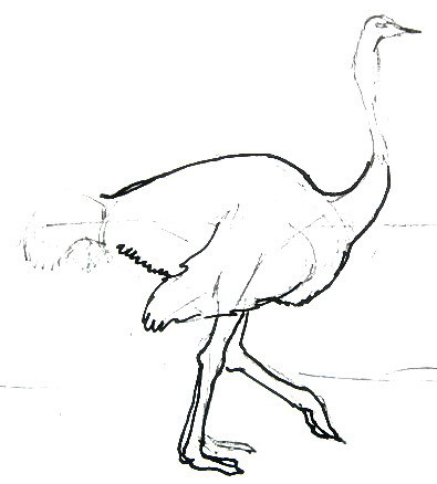 Рисуем ноги страуса