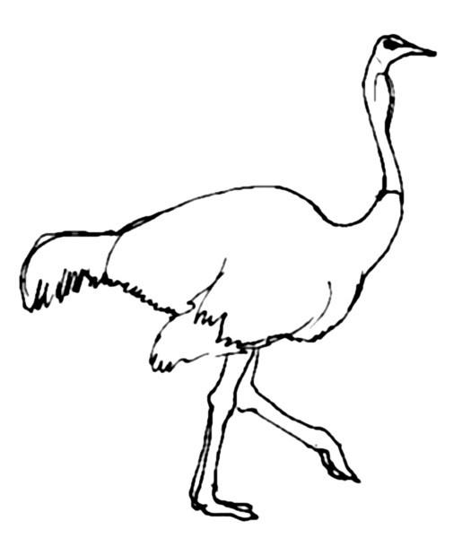 Рисунок страус