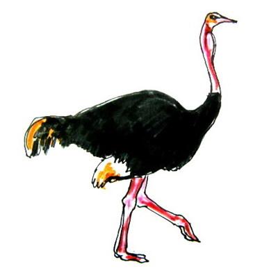 Цветной рисунок страус