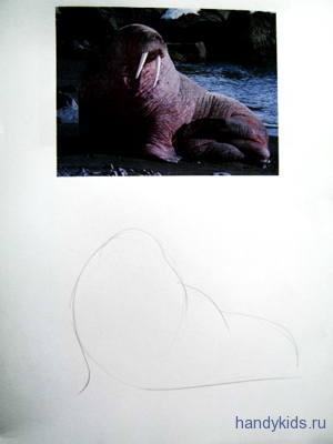 Рисуем моржа