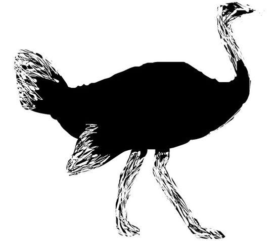Рисунок -африканский страус