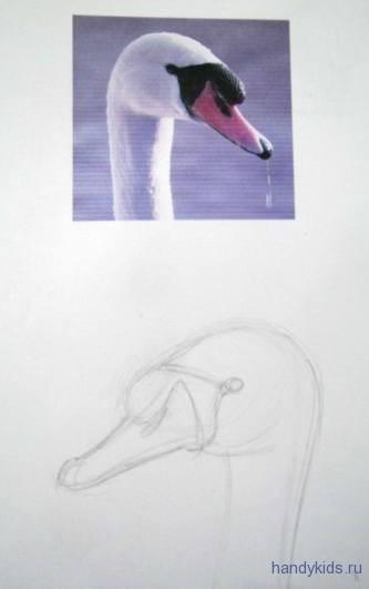 Рисуем голову лебедя карандашом