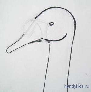 как нарисовать голову лебедя