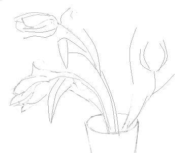 Тюльпаны -рисунок карандашом