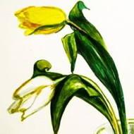 Тюльпаны рисунок