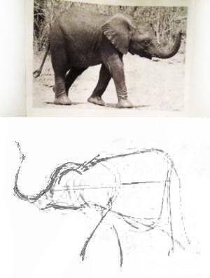 Как нарисовать слонёнка
