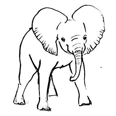 Рисунок индийский слонёнок анфас