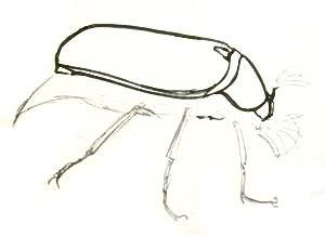 Урок рисования майского жука