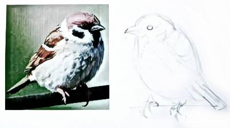 Рисуем птицу воробья