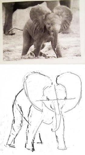 Рисуем слонёнка анфас