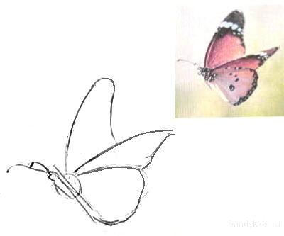 Рисуем бабочку в полёте