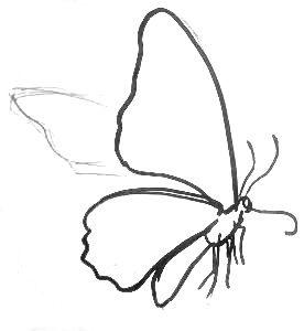 Нарисуем бабочку
