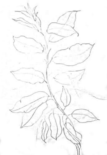 Рисуем ветку черёмухи