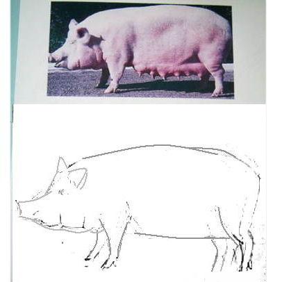 Рисуем свинью