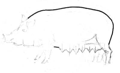 Рисуем свинью поэтапно