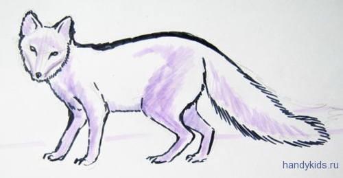 Рисунок песец
