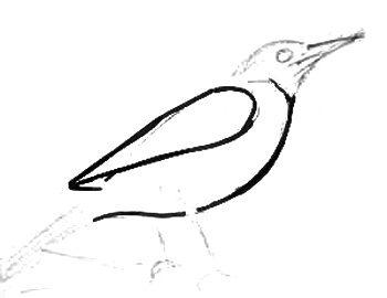 Рисуем дрозда поэтапно