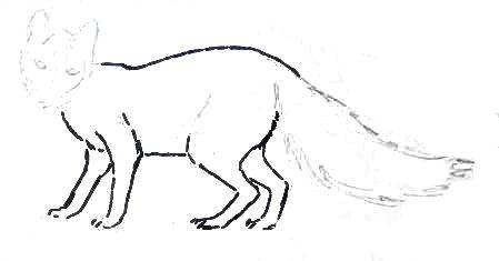 Рисуем полярную лису