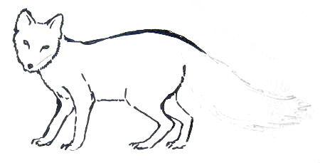 Рисуем песца -7