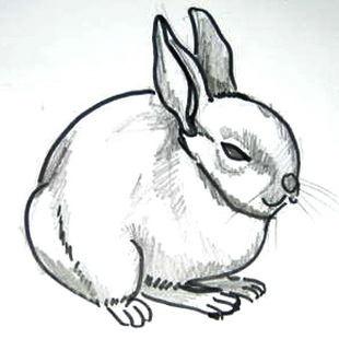 Рисунок Зайчик