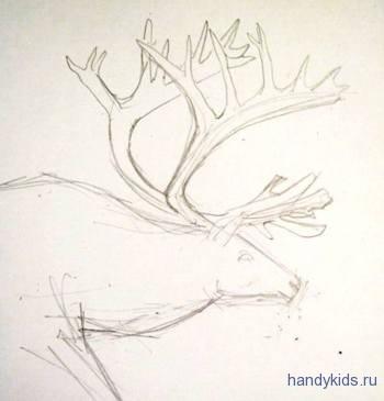 Рисуем рога северного оленя карандашом