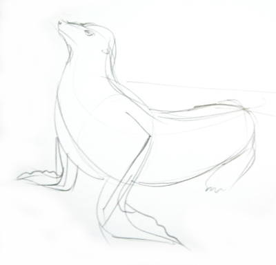 Морской лев -эскиз карандашом