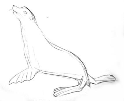 Рисуем морского котика
