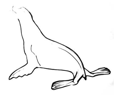 Нарисуем морского котика