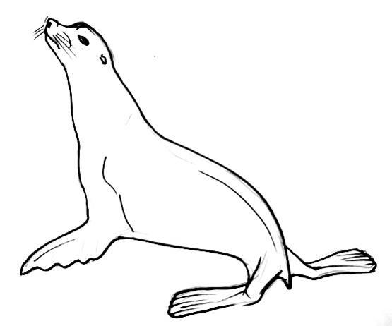 Рисунок  морской котик