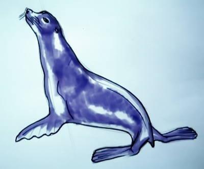 морской котик рисунок