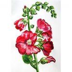 Как нарисовать шток-розу (мальву)
