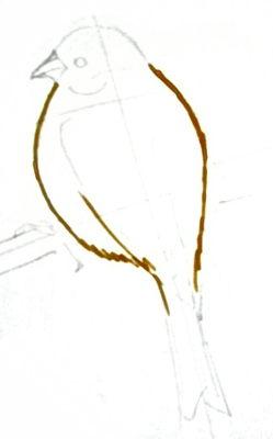 Поэтапный рисунок канарейки