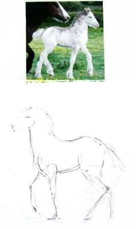 Как нарисовать жеребёнка