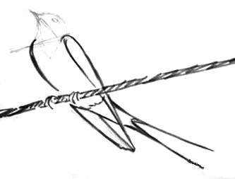 Нарисуем ласточку поэтапно -3